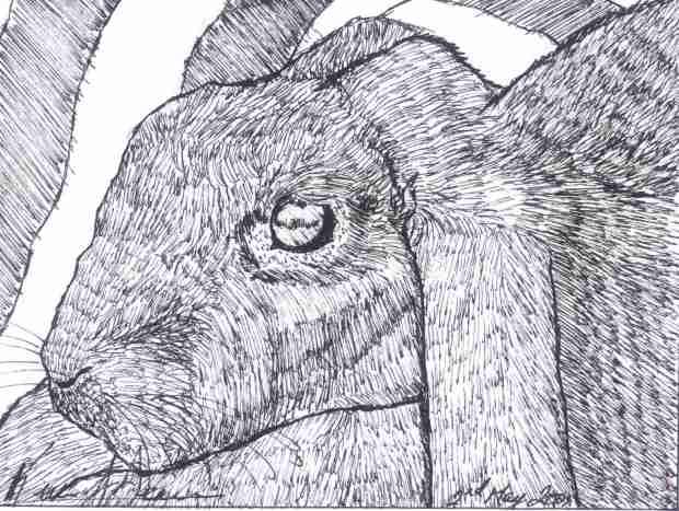 Shawn's Rabbit